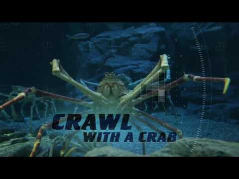 Summer 2017: Dive Into Ocean Explorer | SeaWorld San Diego