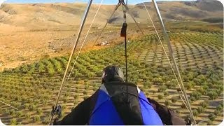 Hang Glider Lands In Tree | How To Make Olive Oil