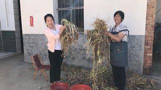 婆媳俩挖12斤大蒜,倒5斤白醋,土方法制作糖蒜,配馒头吃可甜了