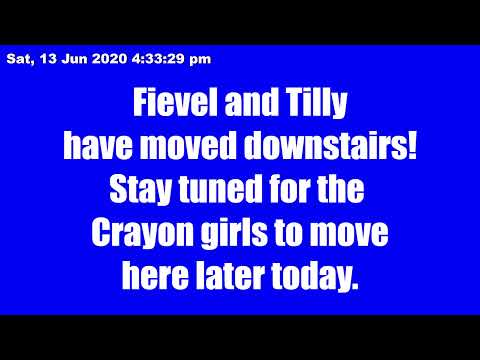 kitkat-playroom-live:-fievel-and-tilly