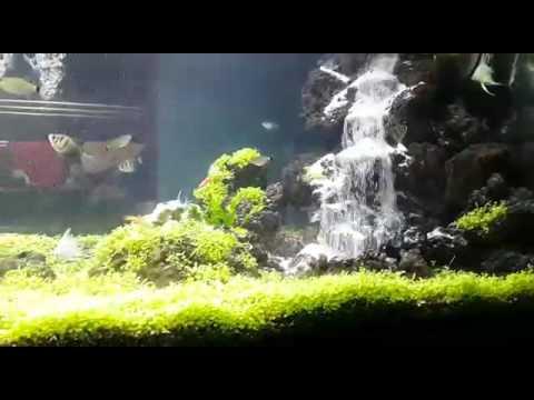 Karyaku Air Terjun Aquascape Budi Pondok Cabe Funnycat Tv
