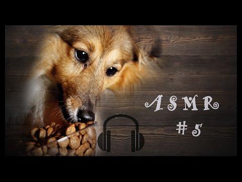 ASMR #5 Dog Eating Sounds Dry Food Kibble (Shetland Sheepdog) Sheltie