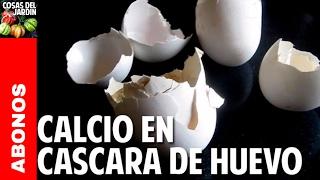 Usar cascara de huevo como fertilizante - Aporte de calcio al suelo @cosasdeljardin