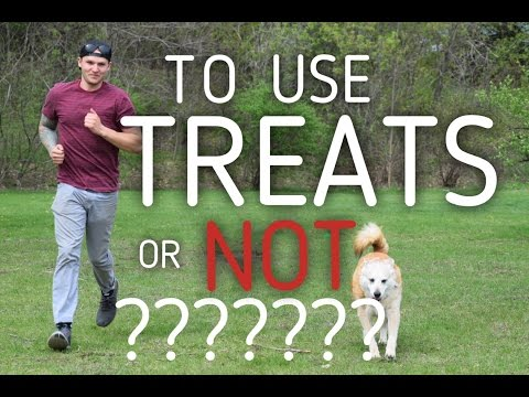 Purely Positive Dog Training and using Food as a reward - America's Canine Educator