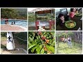 Best Place to Stay in Coorg    ABBHYDHAMA Estate Stay    Coffee Estate with Rooms and Swimming Pool