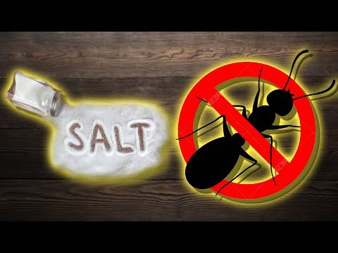 is-salt-good-to-get-rid-of-ants?---and-other-salt-benefits