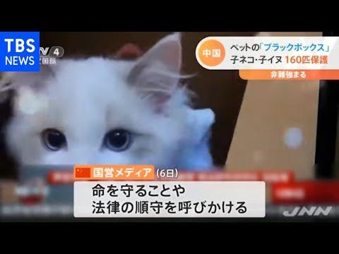 中国 ペットの「ブラックボックス」 非難強まる