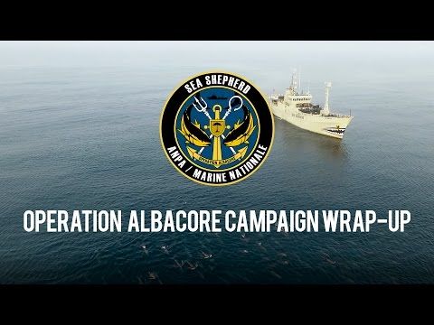 Operation Albacore: Campaign Wrap