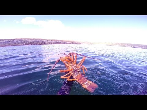 Chatham Islands Diving // 2016