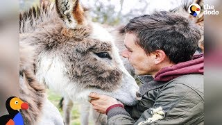 Guy Gives Up EVERYTHING To Save Animals | The Dodo