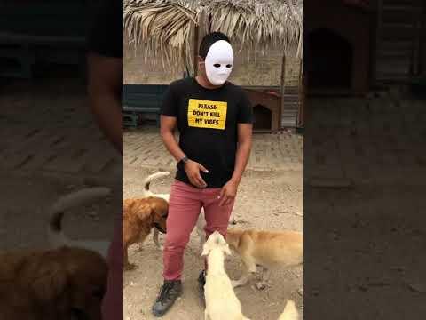Me Pongo esta Mascara y así Reaccionan mis Perros