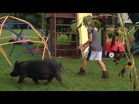 Life's TOO SHORT to raise an UGLY pig   Front Porch Catholic   Vlog