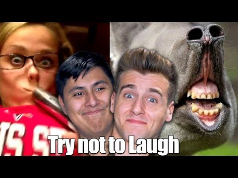 Try Not To Laugh Challenge (Reddit Edition)