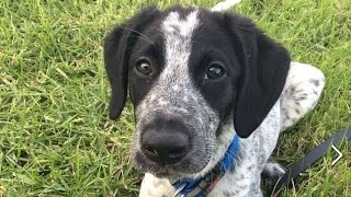Скандал в Новой Зеландии: зачем полицейский застрелил собаку?