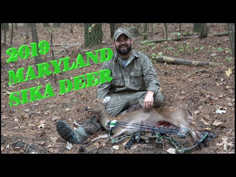 SIKA DEER HUNTING MARYLAND'S EASTERN SHORE