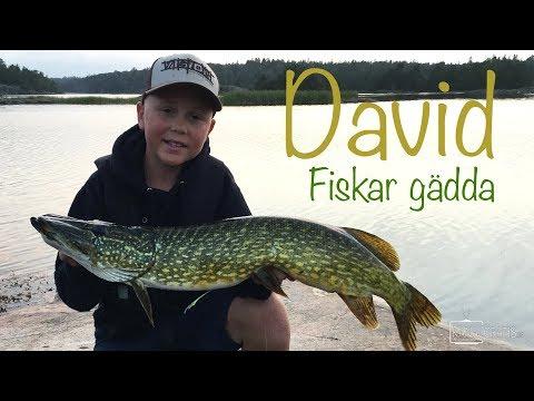 David's Predatorfiske - Fiskar gädda