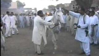 Nisar Stud Farm, Amer Nisar Khan, Bakarkot, Festival, Gujranwala, Horse Dancing in Pakistan