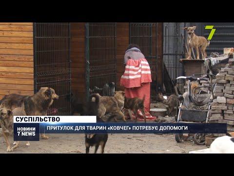 Новости 7 канал Одесса: Притулок для тварин «Ковчег» потребує допомоги