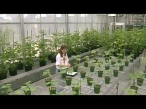 mustsee documentary about gmo part 01 of 10 youtube
