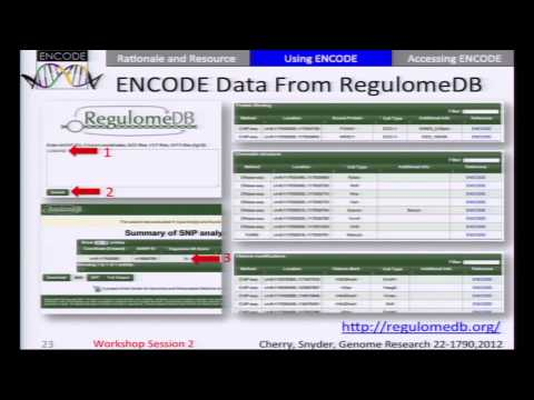 Using ENCODE Data to Interpret Disease-associated Genetic Variation - Mike Pazin