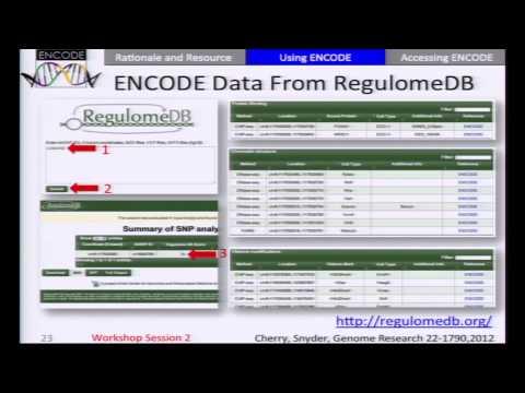 Using ENCODE Data to Interpret Disease-associated Genetic Variation - Mike Pazin