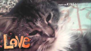 Мои любимые котята. Moi lyubimyye Katyata
