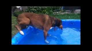 How To Teach Your Dog To Love Water!