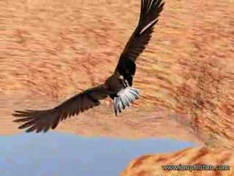 Flying eagle youtube flying eagle altavistaventures Gallery
