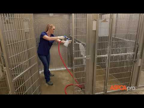 Deep Cleaning For Dog Kennels