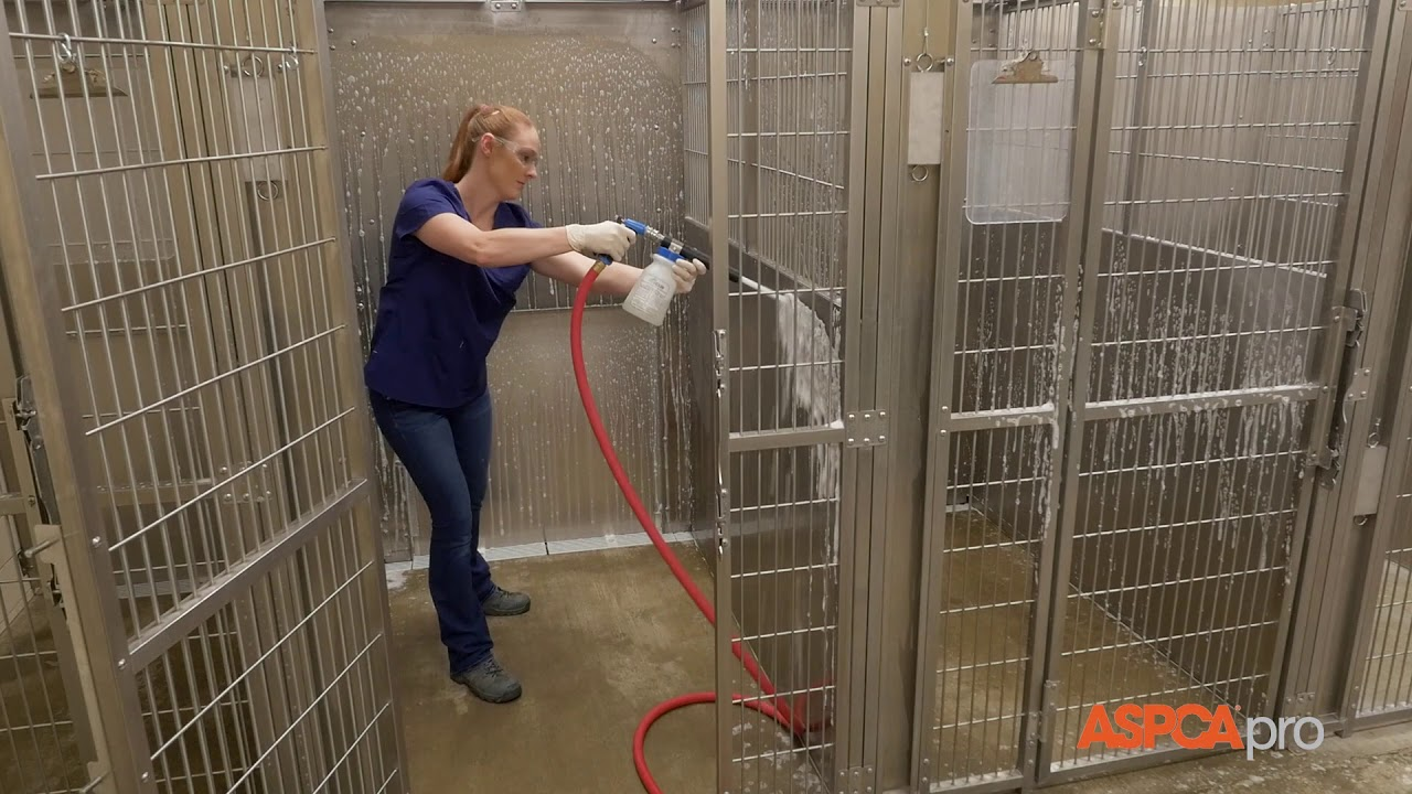 Image result for cleaning animal kennel