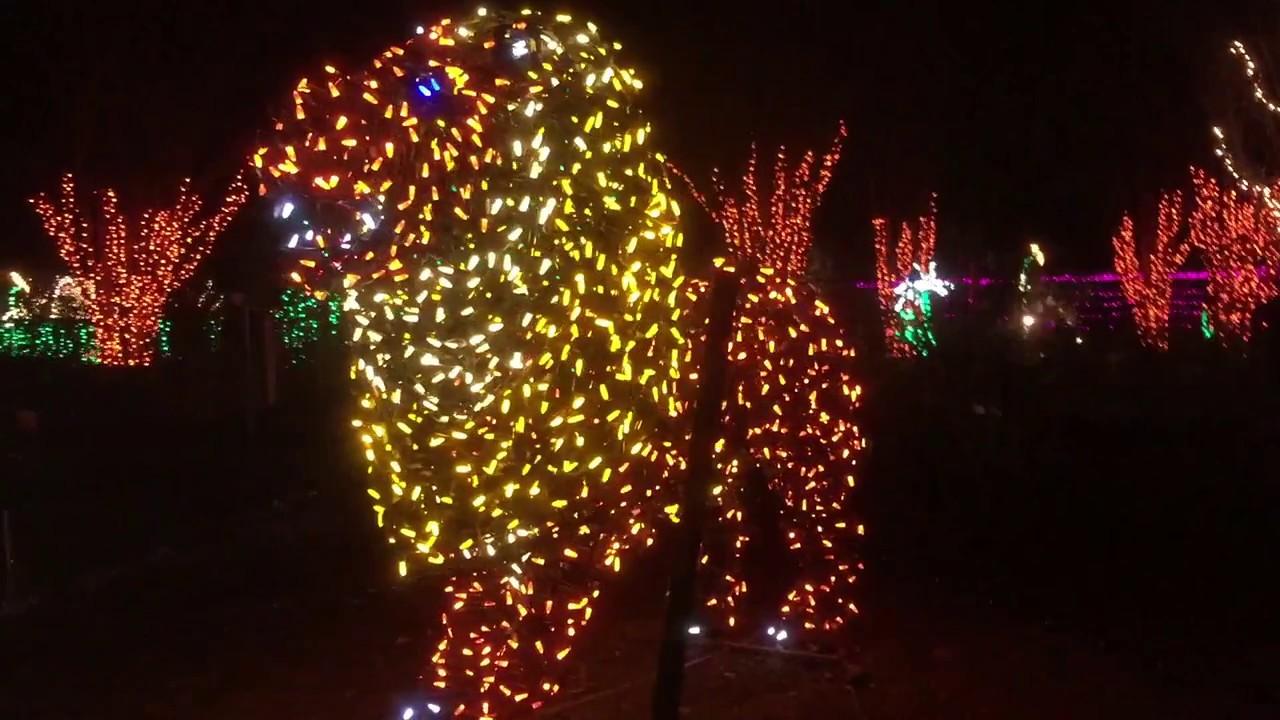 the garden of lights