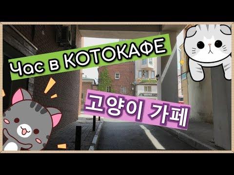 """Котокафе """"Валерьяныч""""/Cat Cafe In Vladivostok/고양이 카페"""
