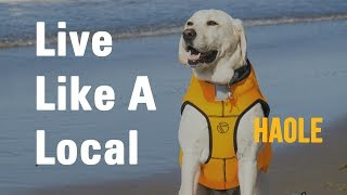 Live Like A Local - Haole