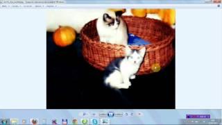 Домик Для Кошек - плетение из лозы (ивы)