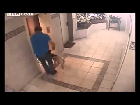 Dog escapes near death in an elevator