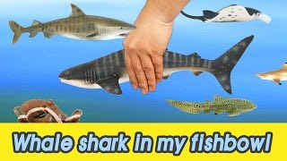[EN] #53 Let's raise Whale shark in my fishbowl! kids education, Animals animationㅣCoCosToy
