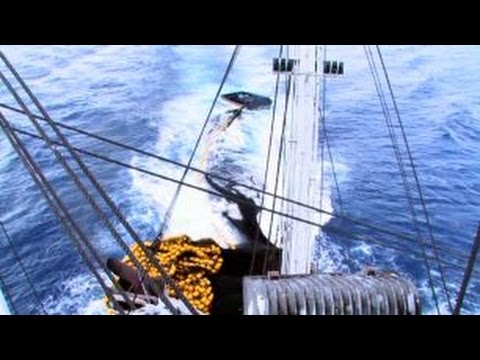 PIRFO - Tuna Purse-Seine - Set Sequence