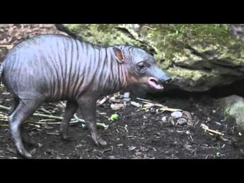 Video: Chester Zoo