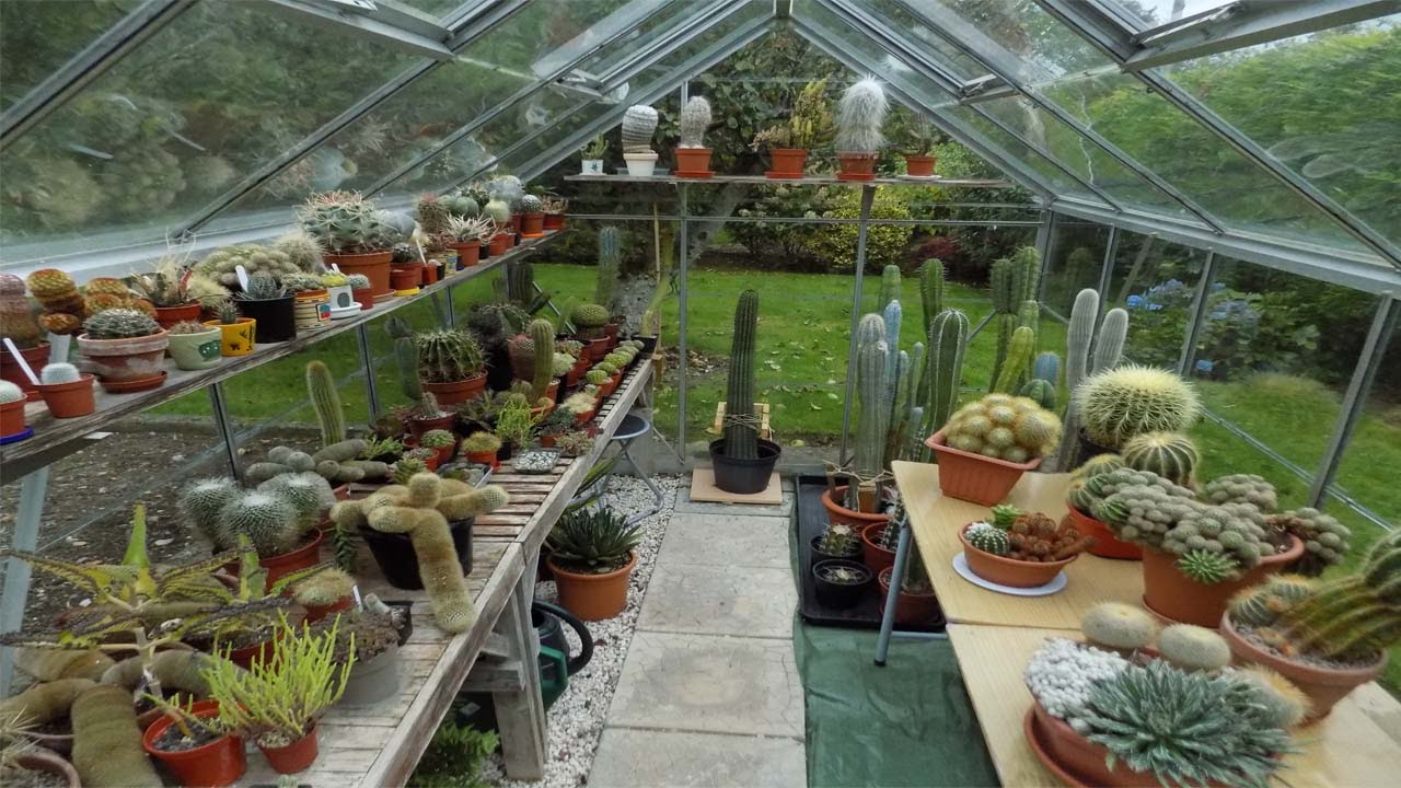 My Cacti & Succulent plant Greenhouse collection in Ireland UPDATE ...