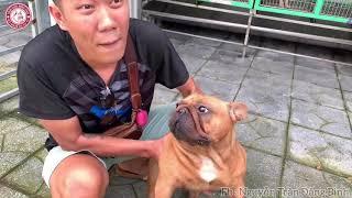 Trại chó kiểng tiền tỷ | Trại Chó Được Thành | Mời cả nhà cùng xem . Liên hệ : 0939.2222.11
