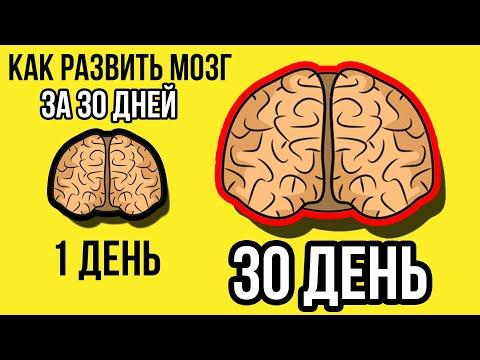 супертренинг для мозга т хорн с вуттон pdf