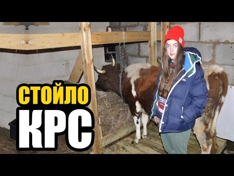 Содержание коровы в домашних условиях видео
