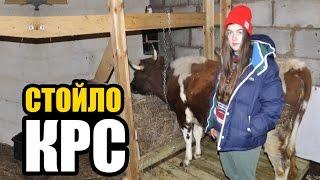 видео Как построить коровник (загон для коров) своими руками.