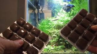 Замороженный корм для рыб. Сравнение Стика и Блистера в кормлении маленьких аквариумов.