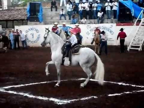 Competencia de Caballos Bailadores Juchitlan Jalisco