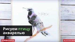 Как нарисовать птицу акварелью — kalachevaschool.ru — Поэтапный урок