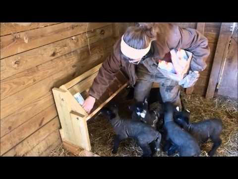 Bottle Feeding Rack For Lambs Or Goats