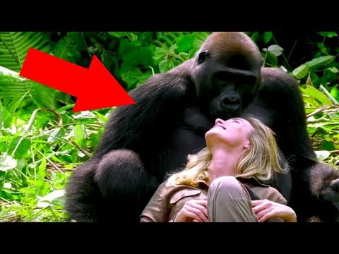 Man Introduces His Wife To The Wild Gorilla He Raised And It Doesnt Go As Planned At All