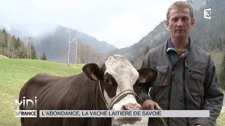 ANIMAUX : L'abondance, la vache laitière de Savoie