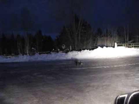 Black Fox In Sun Valley Idaho Ketchum Youtube